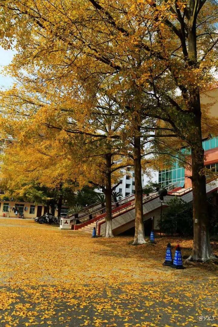 园林风格的教学区.JPG